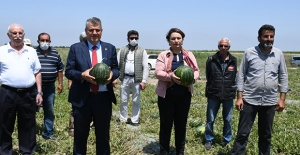"""CHP'li Barut Ve Şevkin İktidara Seslendi: """"Karpuz Üreticilerinin Feryadını Artık Duyun"""""""