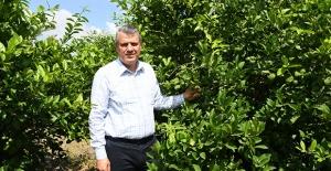 """Üretici Limonu 2.5 Liraya Satıyor, Markette 10 Lira"""