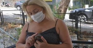 Yaralı Baykuşa Önce Duyarlı Vatandaş Sonra Haybulans El Uzattı