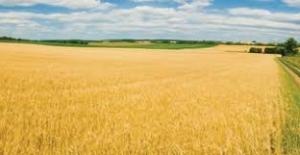Devlet Destekli Tarım Sigortalarında Toplam Sigorta Bedeli Yüzde 30,7 Arttı