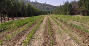 Tarım Ürünleri Üretici Fiyat Endeksi (Tarım-ÜFE) Aylık Yüzde 0.45 Arttı