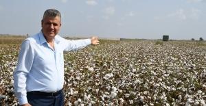"""CHP'li Barut: """"Pamuk Üreticisi Hasat Sevinci Yaşayamıyor"""""""