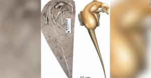 Çin'de Lavların Altına 125 Milyon Yıllık Dinozor Kalıntısı Bulundu