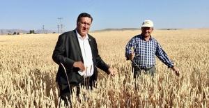 """Gürer: """"Buğdayda Dışa Bağımlılıktan Kurtulmalıyız"""""""