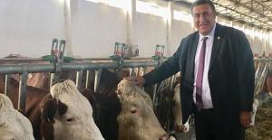 """Gürer: """"Hayvanlara Etkinliğini Kaybeden Aşılar Mı  Enjekte Edildi?"""""""