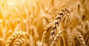 Tarım-GFE Aylık Yüzde 0,61, Yıllık Yüzde 6,74 Arttı