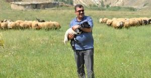 """TÜDKİYEB Genel Başkanı Çelik: """"Doğu Anadolu'nun Zengin Meraları İyi Değerlendirilmeli"""""""