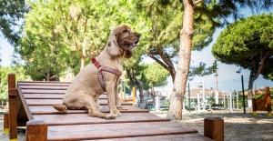 Kuşadası Belediyesi Kahraman Köpek Bob'un İsmini Parka Verdi