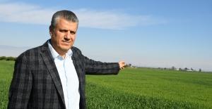 """Ayhan Barut'tan Buğday İthalatına Sert Tepki: """"İş Bilmezlerin İthalat Sevdası Artarak Sürüyor"""""""
