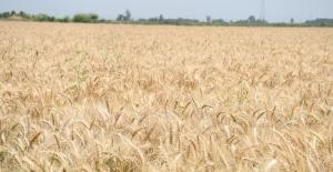 2020 Yılı Bitkisel Ürün Fiyatları Ve Üretim Değerleri Açıklandı