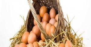 1.6 Milyar Adet Tavuk Yumurtası Üretildi