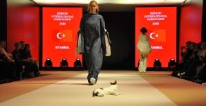 Vakko ESMOD Defilesinde 'Catwalk' Yapan Kedi Milyonların Sevgilisi Oldu