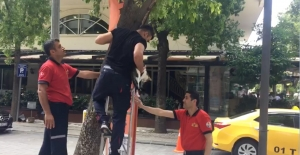 CANKUR Ekibi 3 Gün Boyunca Ağaçta Mahsur Kalan Kediyi Kurtardı