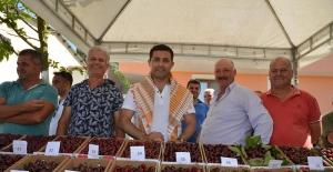 Festivaller Kenti Kuşadası Kiraz Festivaline Tekrar Kavuştu