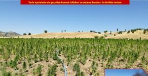 Diyarbakır'da 2 Milyon 111 Bin 50 Kök Kenevir Bitkisi Ele Geçirildi
