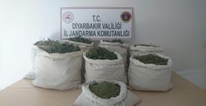 Diyarbakır'da 89 Kg Esrar Maddesi İle 1 Milyon 69 Bin 850 Kök Kenevir Bitkisi Ele Geçirildi