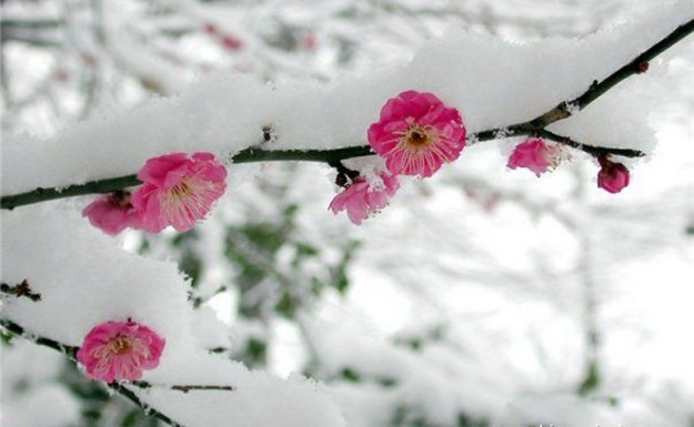 Doğu Nisan'da Kar Altında
