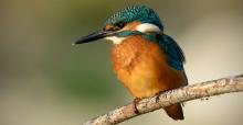 Nallıhan Kuş Cennetinin Kuşları Ankaralılarla Buluşuyor…