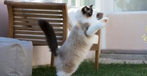 Evcil hayvanlar için deprem anı ve sonrası nasıl yönetilmeli?