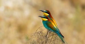 Nallıhan Kuş Cenneti