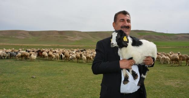 """TÜDKİYEB Genel Başkanı Çelik: """"Küpesiz Hayvanların Sevklerine İzin Verilmeyecek"""""""
