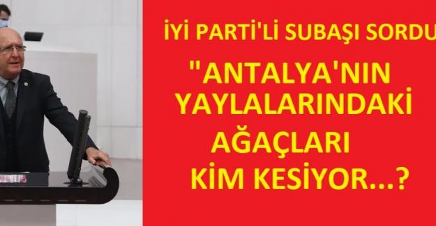 İYİ Parti: Antalya'nın Yaylalarındaki Ağaçları Kim Kesiyor?