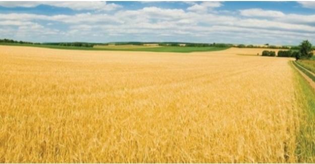 Tarım Ürünleri Üretici Fiyat Endeksi (Tarım-ÜFE) Aylık Yüzde 1,76 Arttı