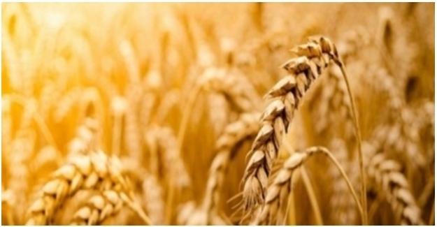 Tarımsal Girdi Fiyat Endeksi Aylık Yüzde 2,49, Yıllık 24,43 Arttı