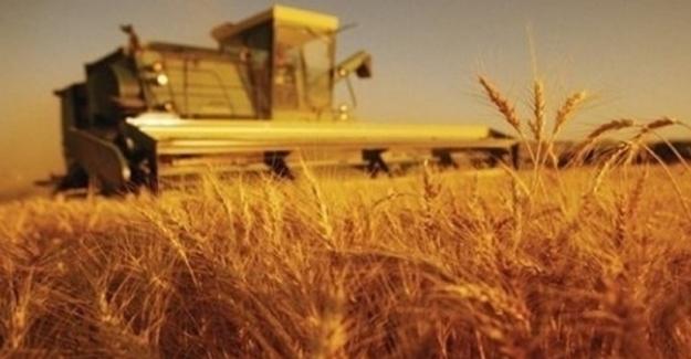 Tarım-ÜFE  Ağustos'ta Yüzde 1,77 Arttı