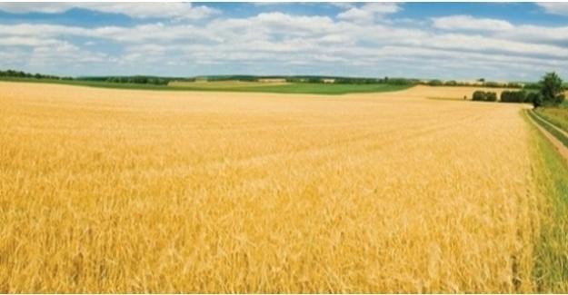 Tarım Ürünleri Üretici Fiyat Endeksi (Tarım-ÜFE) Aylık Yüzde 1,46 Arttı