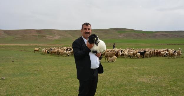 """TÜDKİYEB Genel Başkanı Çelik: """"Dünya Nüfusu Artarken Sağlıklı Gıdaya Erişim Daha Da Önemli Hale Geldi"""""""