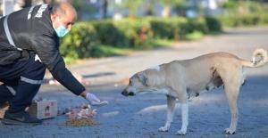Çukurova'da Sokak Hayvanları Pandemide De Kaderine Terk Edilmiyor