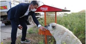 """""""Sokak Hayvanlarımıza Dokunanlar Karşılarında Bizi Bulacak"""""""