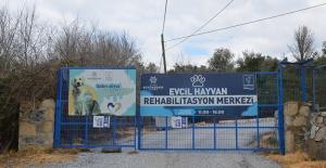 """Kuşadası Belediyesi: """"Evcil Hayvan Rehabilitasyon Merkezimiz 10 Gün İçinde Yeniden Ziyarete Açılacak"""""""