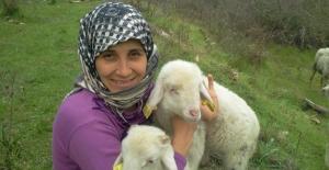 Aydınlı Kadın Çobandan Destek Çağrısı
