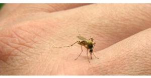 Sivrisinek Isırığı Alerjisi ve Korunma Önlemleri