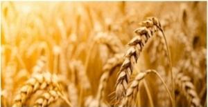 Tarımsal Girdi Fiyat Endeksi Aylık Yüzde 1,98, Yıllık 29,38 Arttı