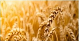 Tarımsal Girdi Fiyat Endeksi Aylık Yüzde 0,93, Yıllık 28,74 Arttı