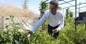 Gölbaşı Belediyesinden Çiftçiye Yüzde 75 Hibe Buğday Desteği